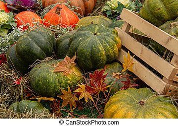 Orange and green pumpkins in a wooden crate and laid out on dry grass