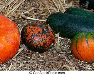 Orange and green pumpkins on straw