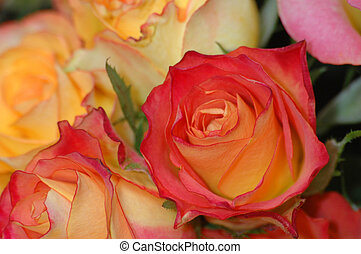 Orange and red roses - Bouquet orange and red Rose, petal