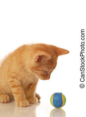 orange and white tabby kitten playing with a ball - seven weeks old