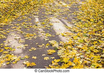 Orange and yellow autumn leaves on asphalt