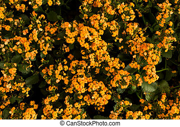 Orange and yellow flower field. Floral background.