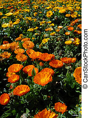 Orange and Yellow Flower Meadow