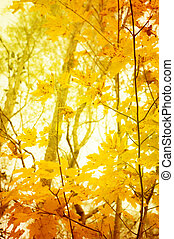 orange and yellow leafes of trees in fall for background