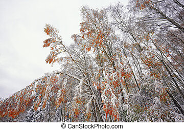 orange and yellow leaves in late fall or early winter under the snow