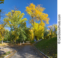 Orange and yellow trees in the park. Autumn landscape, non urban scene.