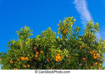 orange arbre ciel oranges mre - Arbre Ciel