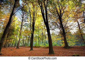 orange autumn forest - trees in orange autumn forest