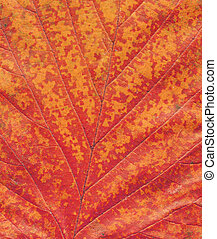 Orange autumn leaf macro. Minimal autumn concept