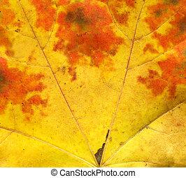 Orange autumn leaf macro