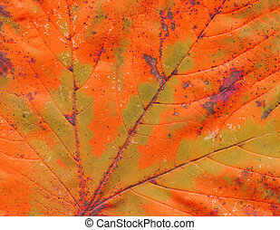 Orange autumn leaf macro