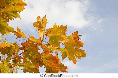 Orange autumn leaves on blue sky background