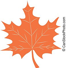 Maple Leaf vector