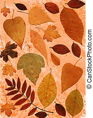 orange background with different autumn leaves