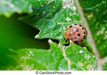 orange beetle on green leaf