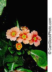 orange, blütenblätter