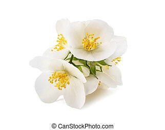 Orange blossom flowers - Orange blossom (zagara) isolated on...