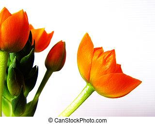 orange blossoms - I love 'em!