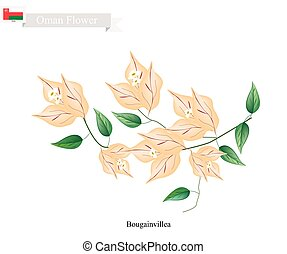 Illustration of Orange Bougainvillea Flowers or Paper Flowers. One of The Most Popular Flower in Oman.