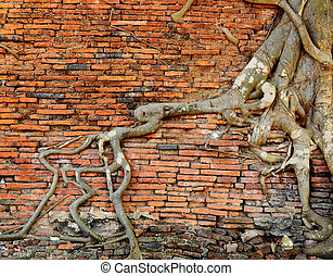 orange brick wall with ancient root tree