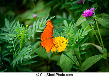 Orange butterfly in a green flower garden