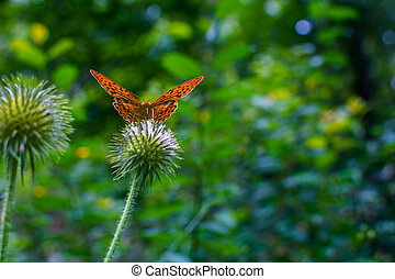 orange butterfly in the forest on a plant