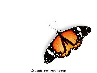 Orange butterfly, isolated on white background