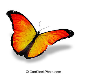 Orange butterfly, isolated on white