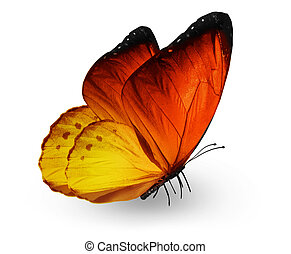 Orange butterfly , isolated on white