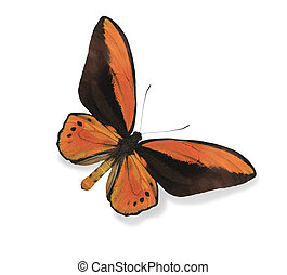 Orange butterfly isolated on white