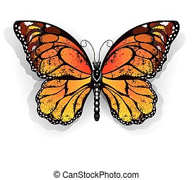 Orange butterfly monarch