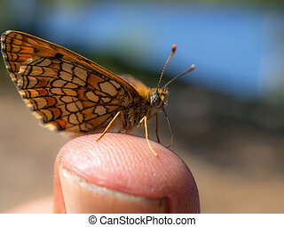 butterfly on a finger close up