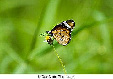 orange butterfly on flower grass