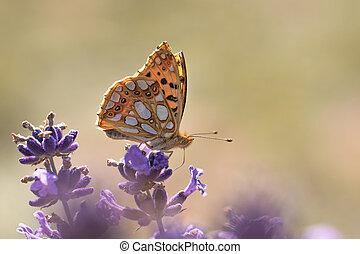 Orange Butterfly on Lavender