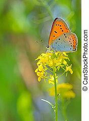 Orange butterfly on summer flower