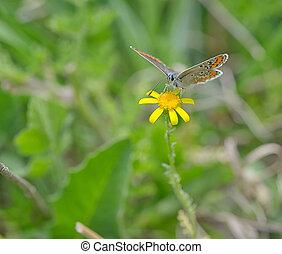 Orange butterfly on yellow flower
