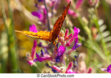 orange butterfly sitting on a flower spring Sunny day