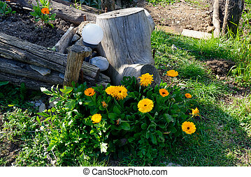 orange calendula flower in a garden