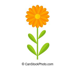Orange Calendula flower plant. Vector illustration.