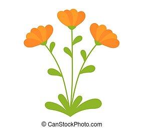 Orange Calendula flowers blooming. Vector illustration.