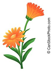 Orange calendula flowers with green leaves