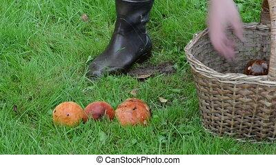 orange-cap wicker basket - man hand take orange-cap boletus...