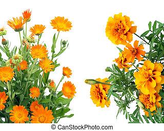 orange, carte postale, fleurs
