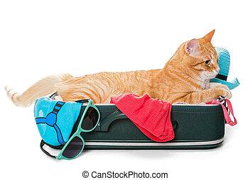 Orange cat lay on a suitcase
