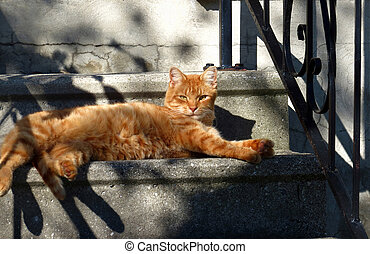 Orange Cat - Light and late afternoon shadows play over an ...