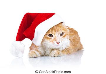 orange cat wearing santa claus hat