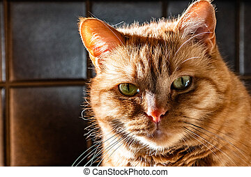 Orange cat with green eyes looking at the camera; bright light coming from the left side