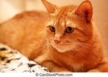 Orange cat with yellow eyes