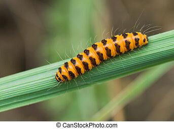 Orange caterpillar with black stripes on a green leaf
