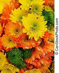 orange, chrysanthème, coloré, pâquerettes, jaune, fleurs colorées